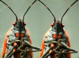 macro_stereophotos_3d