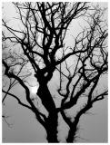 30 May 04 - Silhouette Tree
