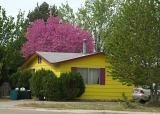 colorful house_0048.jpg