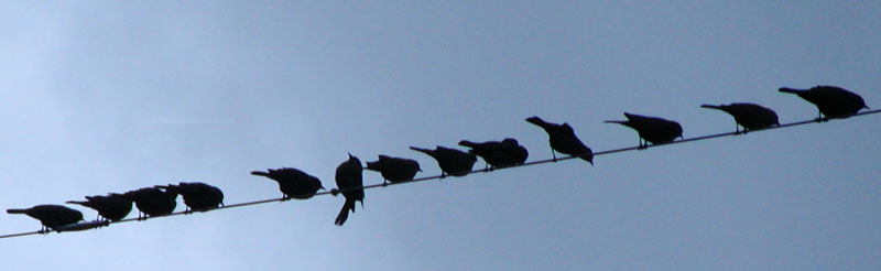 Norm always seemed to see things differently than the other birds...