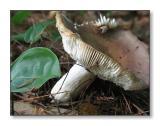 Mushroom & AntBedford, NH