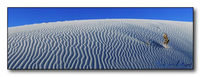 White Sands : Week 10