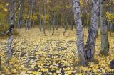 Eastern Sierra for Fall Colors - 2004