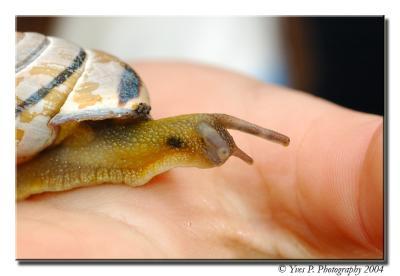 Snail ...