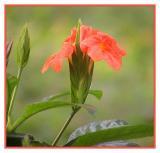 flower32.jpg