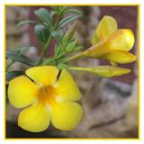 flower34.jpg