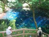 bridge & blue