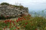 Wildflowers cover Acrocorinth in the spring