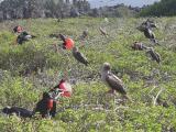 184 Miscellaneous bird life.jpg