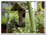 Louisiana Great and funny bird houses