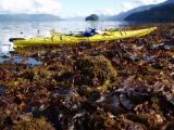 misty fiords kayak and kelp