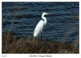 Great Egret at the Sunnyvale Baylands