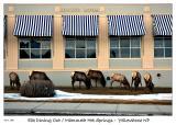Elk Dining Out