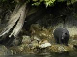 Best Spots to Find Wildlife on Vancouver Island & Southern BC