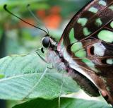 Butterflies, Dragonflies, and other 6-Leggeds
