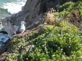 Seagull in Pismo Beach, California
