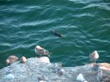 Seagulls in Pismo Beach, CA