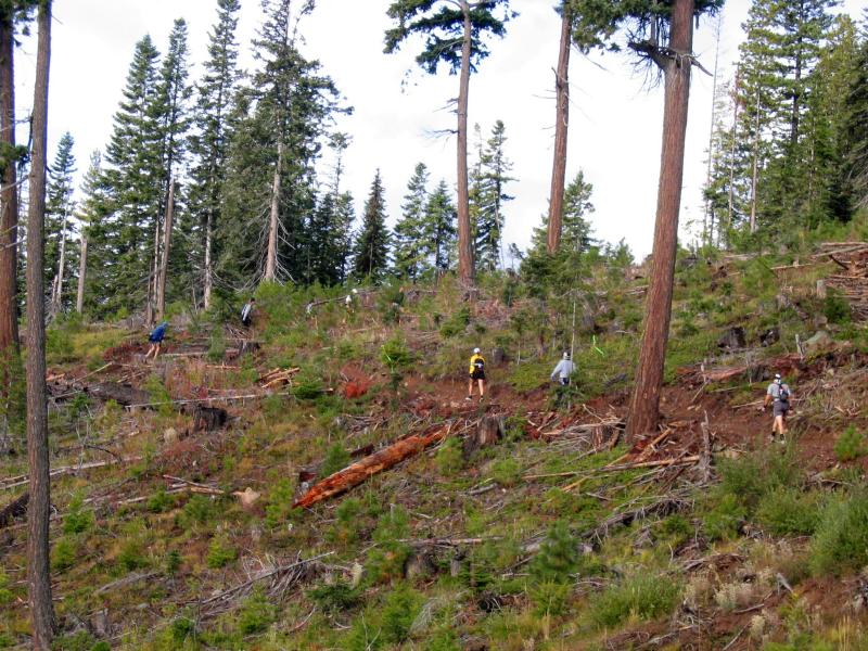 Climbing in the clearcut