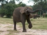 Emoting Elephant