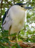 IMG_9415 birds.jpg