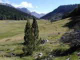 Plateau de Bious Artigues