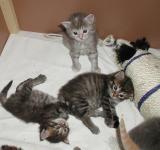 Hulda, Hilda and Blue