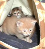 Pikku ja Riki teltassa
