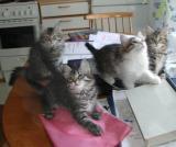 Essi, Vappu, Martta and Bella