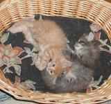 The boys enjoy the basket