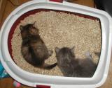 Girls exploring mom's litter box.