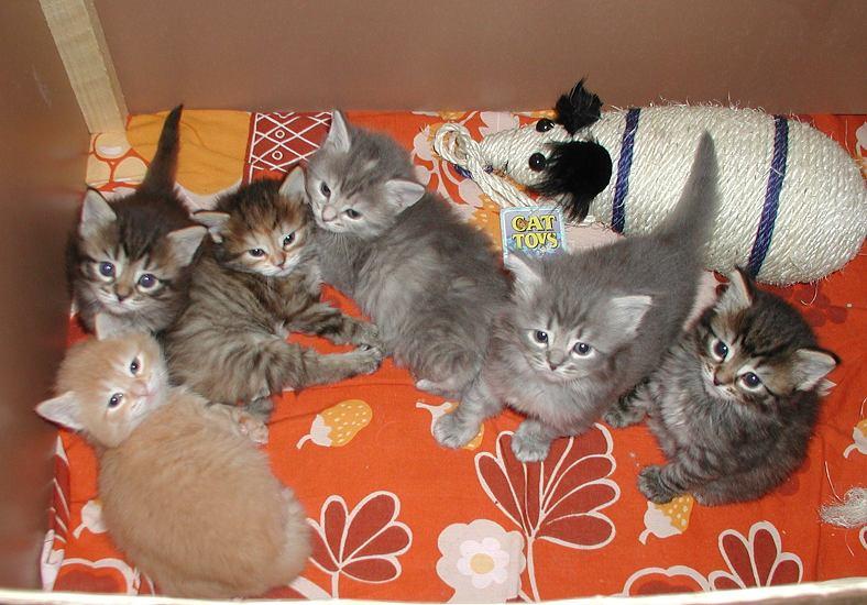 The whole gang at 4 weeks