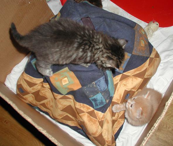 Two kittens having fun.