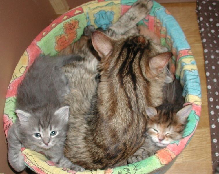Viki, Roosa and Pikku