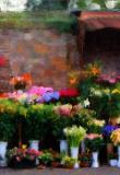 Ferrara Flowers