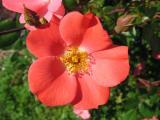 Summer Flowers 2004