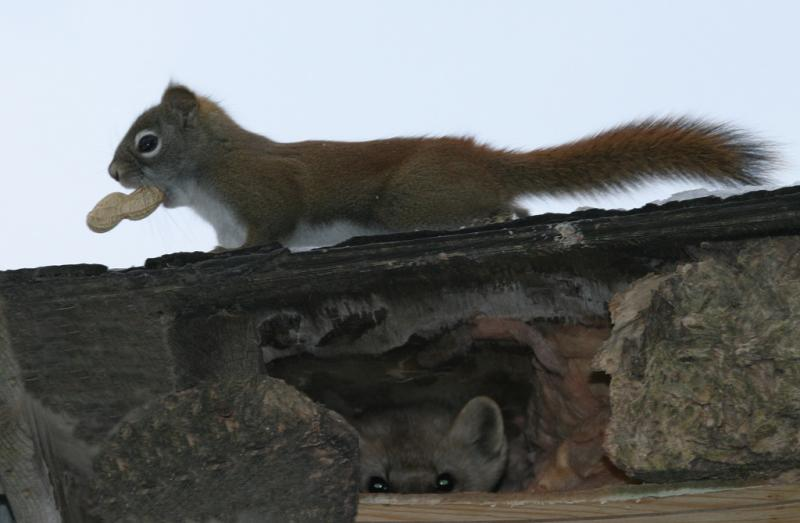 Squirrel and Marten on different levels