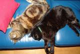 Milos and Simi sleeping together