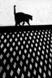Abstract cat on balustrade shadow