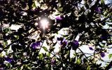 purple flowers 4.jpg