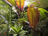 Splashing leaf colours