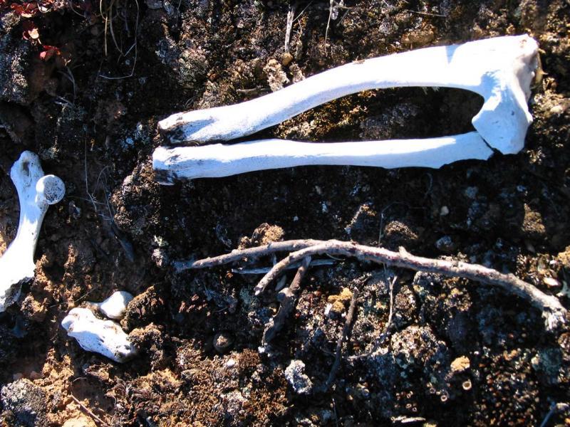 Bones along the way