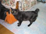 Noriko's Kitty