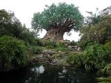Disney - Animal Kingdom Gallery