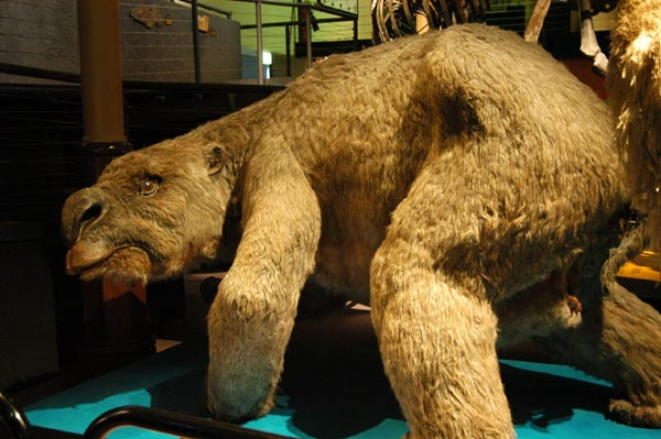 B And B Auto >> Diprotodon Optatum, the largest marsupial ever, is believed to have become extinct as recently ...