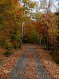 Rustle Of Leaves