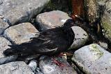 Sad bird, Savannah