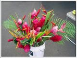 Ginger Plants & Bird of Paradise