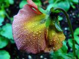 Raindrop close up