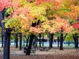 Fall in High Park
