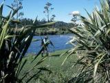 March 3, 1996 --- Upper Grey River/Ellis Creek, South Island, New Zealand